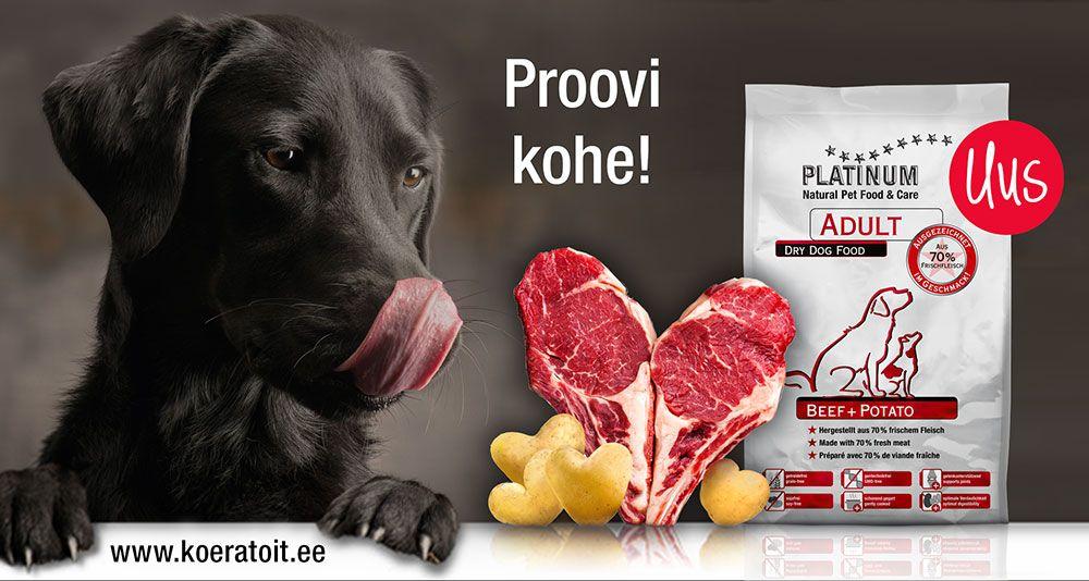 Platinum koeratoidul uus maitse